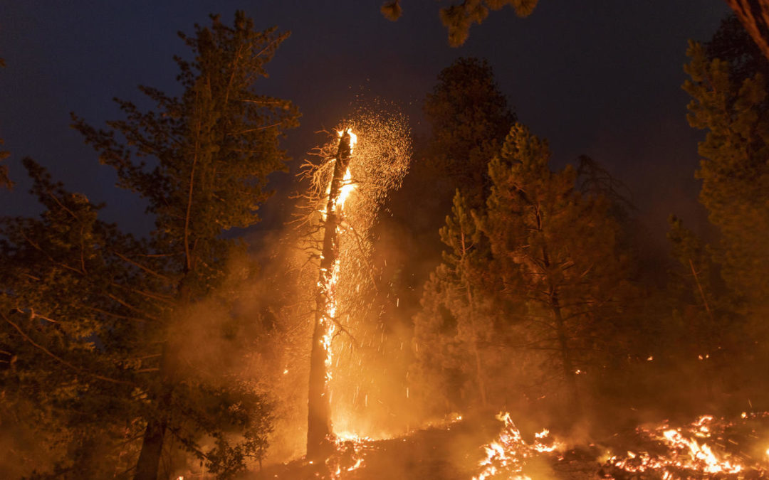 Embers fly from a burning tree as the Bobcat Fire devours the Angeles National Forest