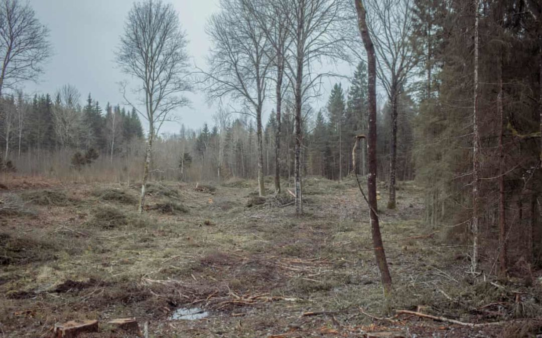 Cleared forest land in the Haanja nature reserve