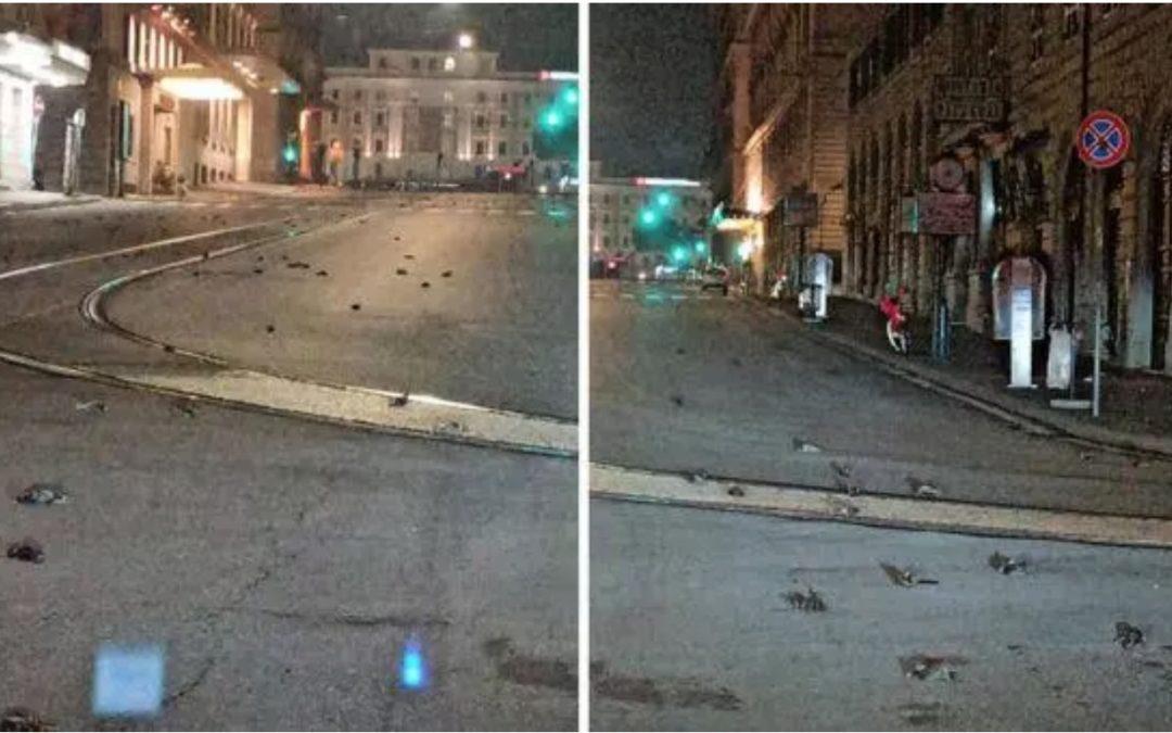 Dead Birds in Rome