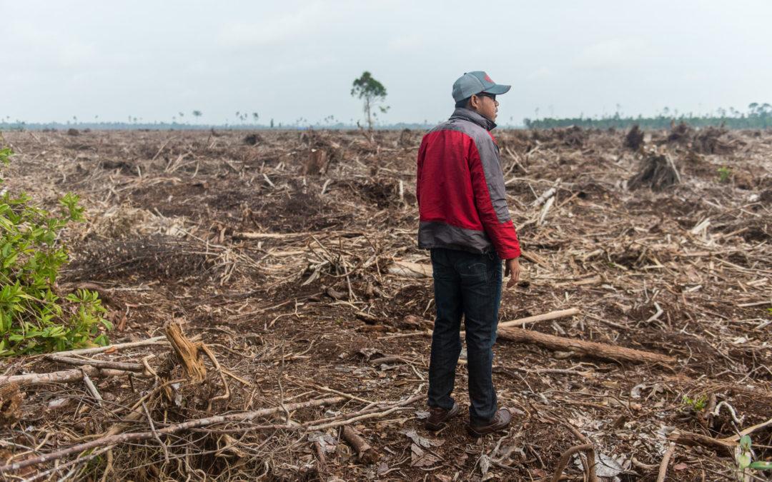 Sumatra_Deforestation_Kodas-scaled
