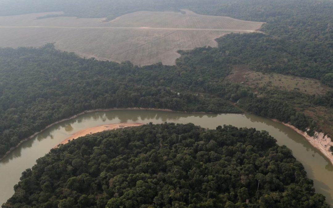 Brazil's Amazon deforestation surges 67% in May as Bolsonaro pledges fall flat