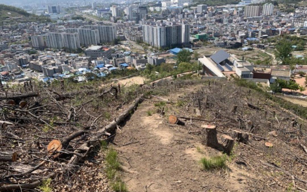 Korea cut trees