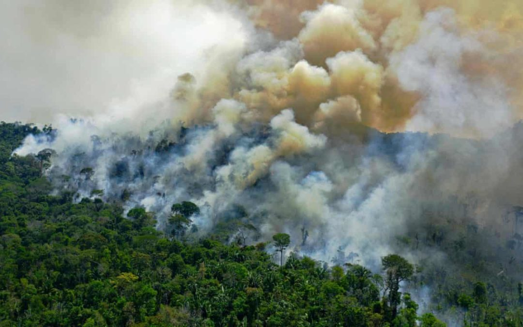 Amazon rainforest now emitting more CO2 than it absorbs