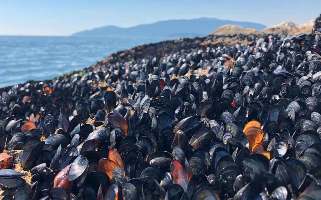 'Heat dome' probably killed 1bn marine animals on Canada coast, experts say